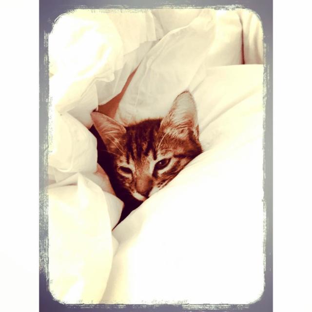 Sleepy head kittensofinstagram